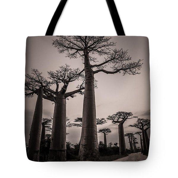 Baobab Avenue Tote Bag