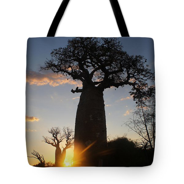 baobab from Madagascar 6 Tote Bag