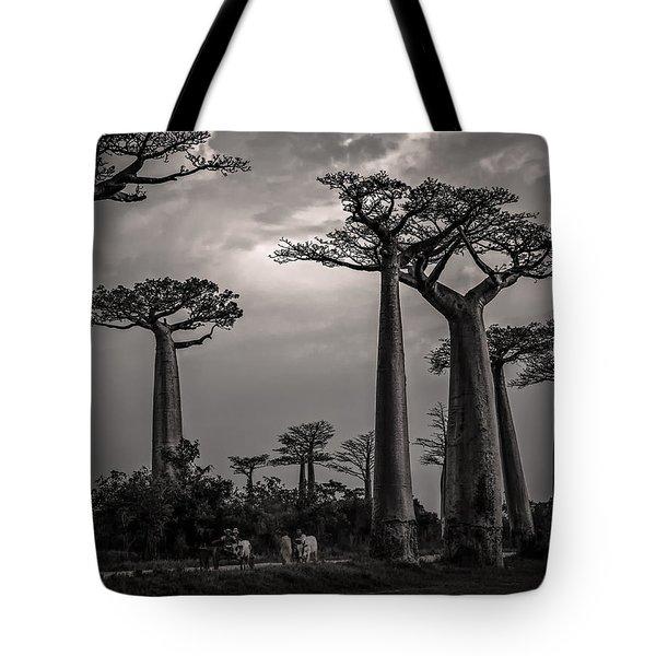 Baobab Highway Tote Bag