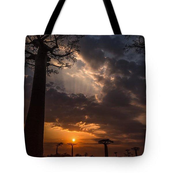 Baobab Sunrays Tote Bag