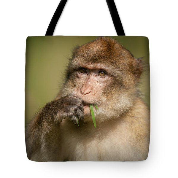 Barbary Macaque Tote Bag