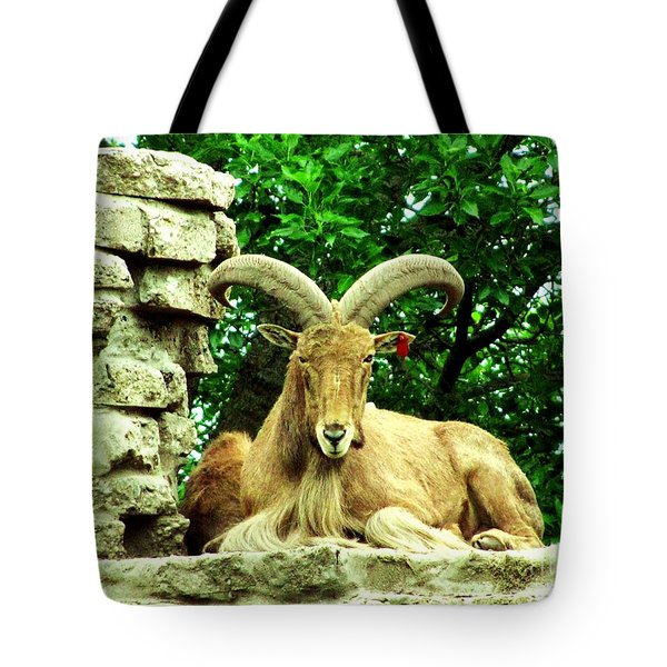 Barbary Sheep 1 Tote Bag by Margaret Newcomb