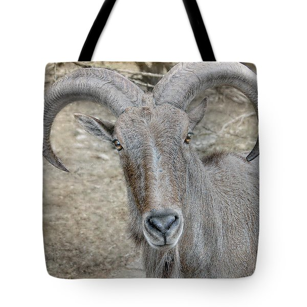 Tote Bag featuring the photograph Barbary Sheep by Dyle   Warren