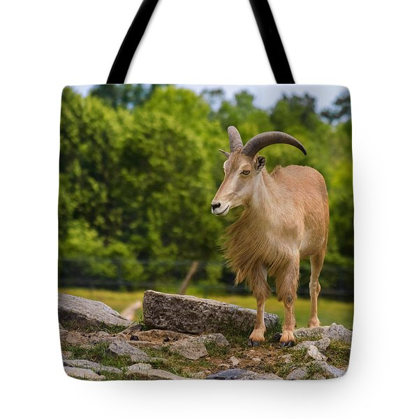 Barbary Sheep Tote Bag