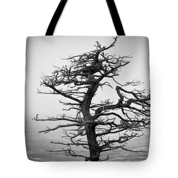 Bare Cypress Tote Bag by Melinda Ledsome