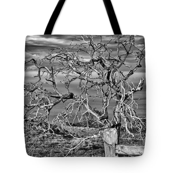 Bare Tree In Hana Tote Bag by Loriannah Hespe