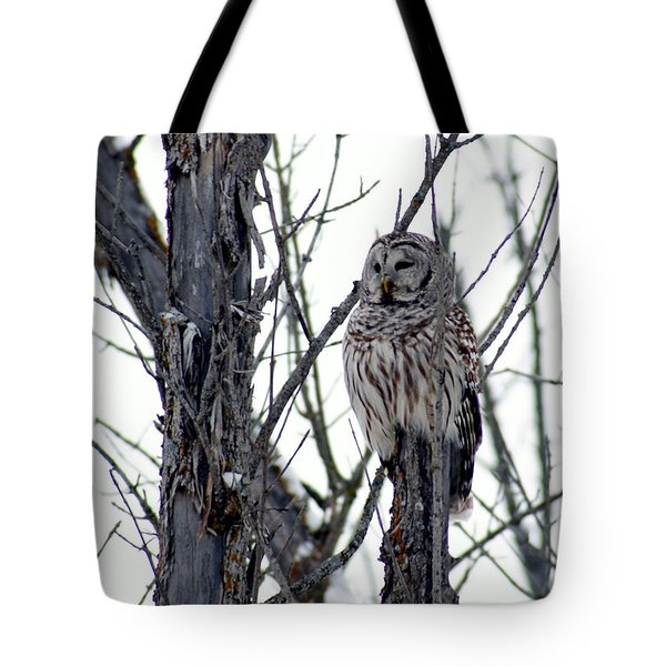 Barred Owl 2 Tote Bag by Steven Clipperton