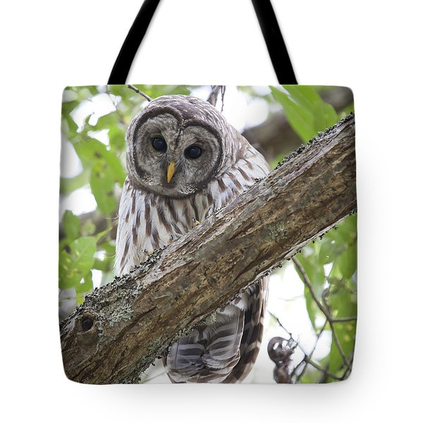 Barred Owl Tote Bag by Chris Dutton