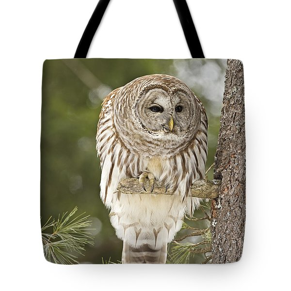 Barred Owl Hunting Tote Bag