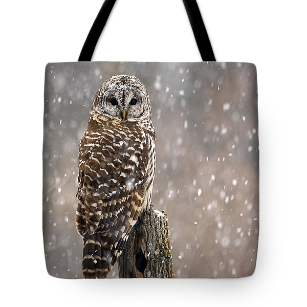 Barred Owl In A New England Snow Storm Tote Bag