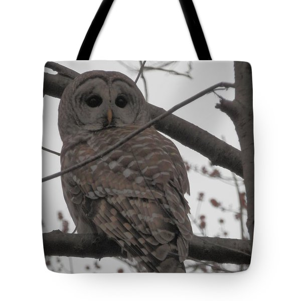Tote Bag featuring the photograph Barred Owl Perched by Emmy Marie Vickers