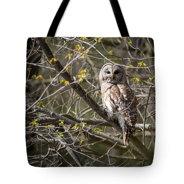 Barred Owl Portrait Tote Bag by Bill Wakeley