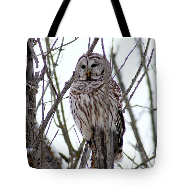 Barred Owl Tote Bag by Steven Clipperton