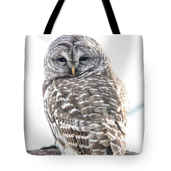 Barred Owl2 Tote Bag by Cheryl Baxter