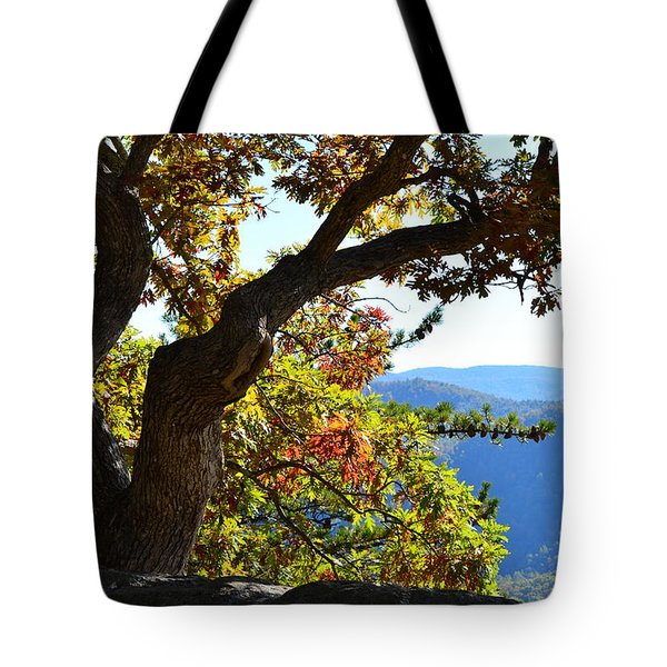 Tote Bag featuring the photograph Basking In The Sunlight by Cathy Shiflett