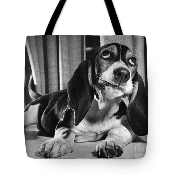 Basset Hound Puppy Tote Bag by ME Browning