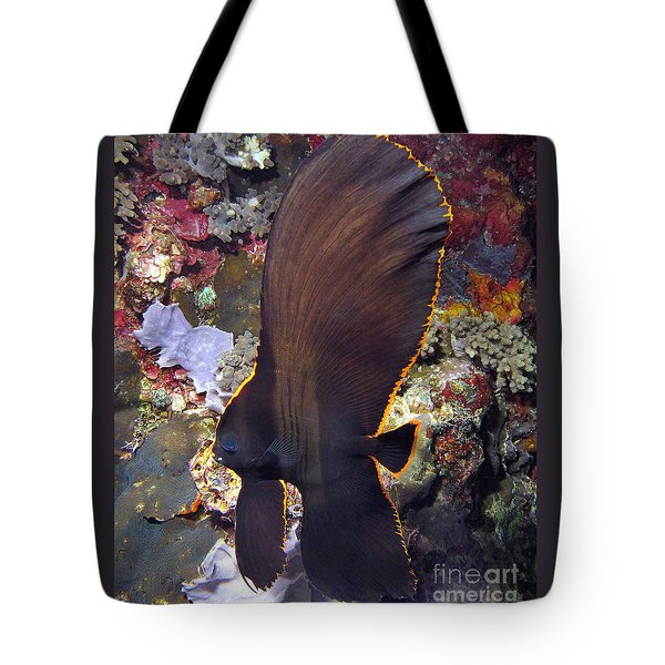 Tote Bag featuring the photograph Bat Fish by Sergey Lukashin