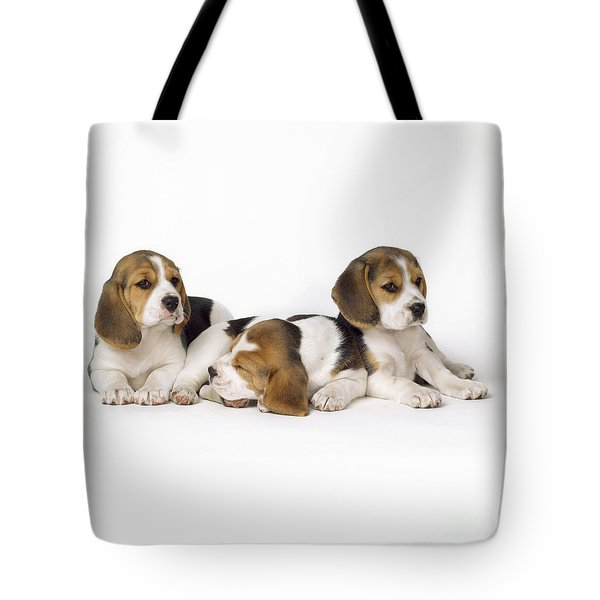 Beagle Puppies, Row Of Three, Second Tote Bag