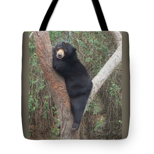 Bear In Tree   Tote Bag