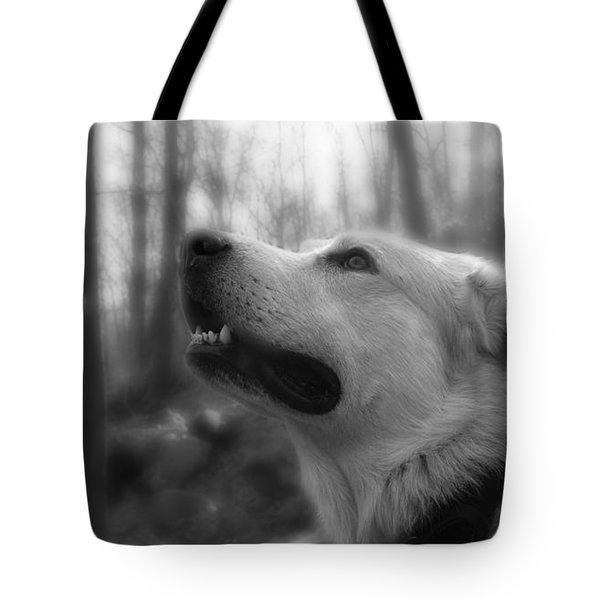 Bear Tooth Not Camera Shy Tote Bag