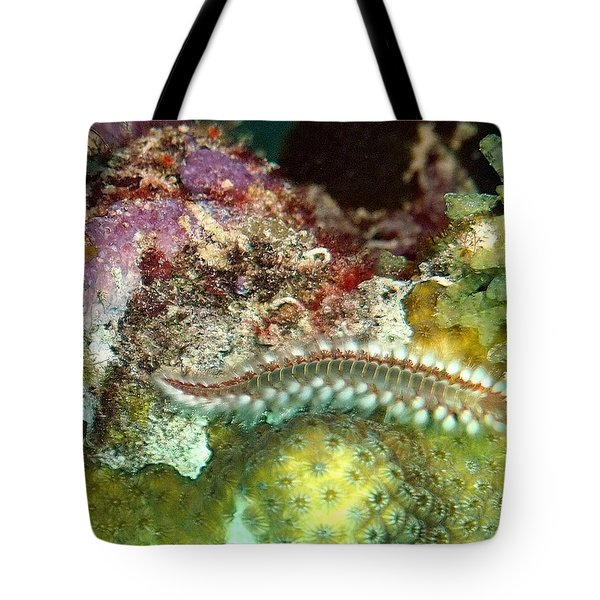 Tote Bag featuring the photograph Bearded Fireworm On Rainbow Coral by Amy McDaniel