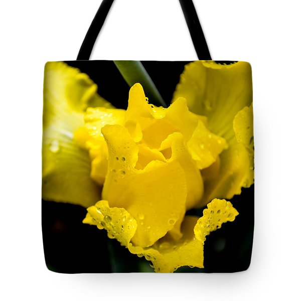 Bearded Iris Morning Dew Tote Bag by Mary Ward