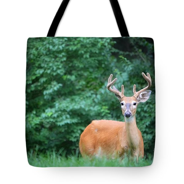 Beautiful Buck  Tote Bag