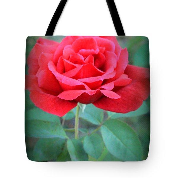 Beautiful Morning Rose  Tote Bag