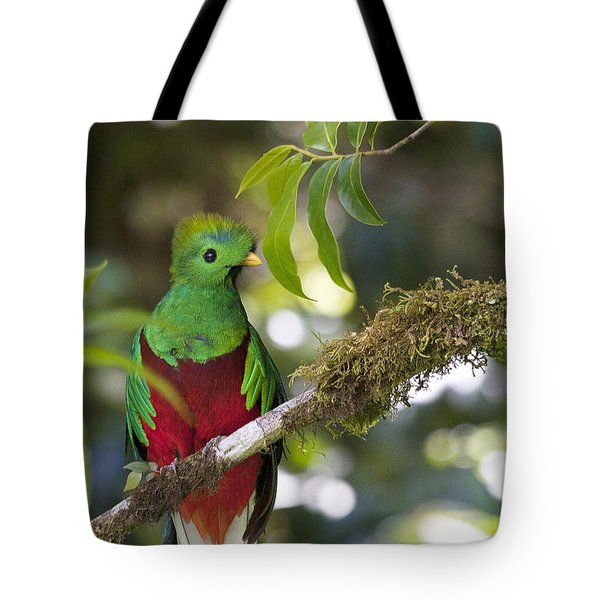 Beautiful Quetzal 1 Tote Bag by Heiko Koehrer-Wagner