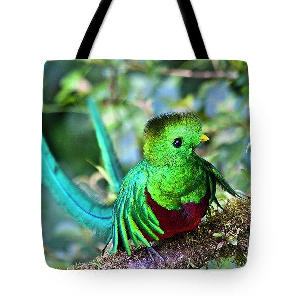 Beautiful Quetzal 5 Tote Bag by Heiko Koehrer-Wagner