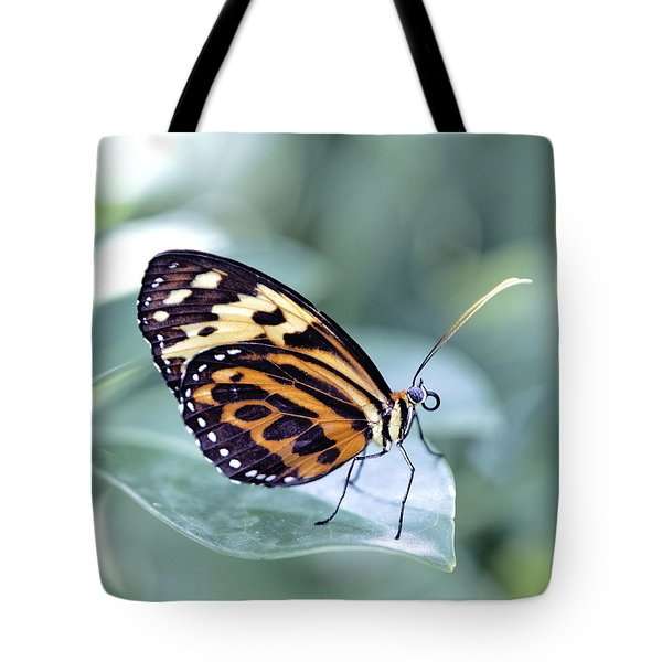 Beautiful Red Cracker Butterfly Tote Bag