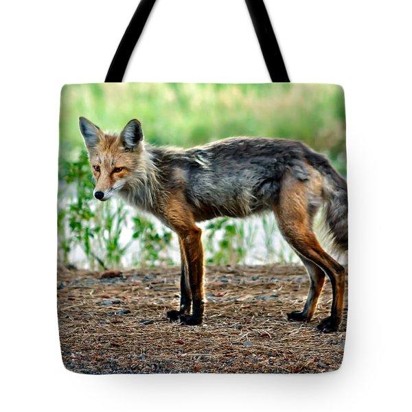 Beautiful Red Fox Tote Bag by Robert Bales