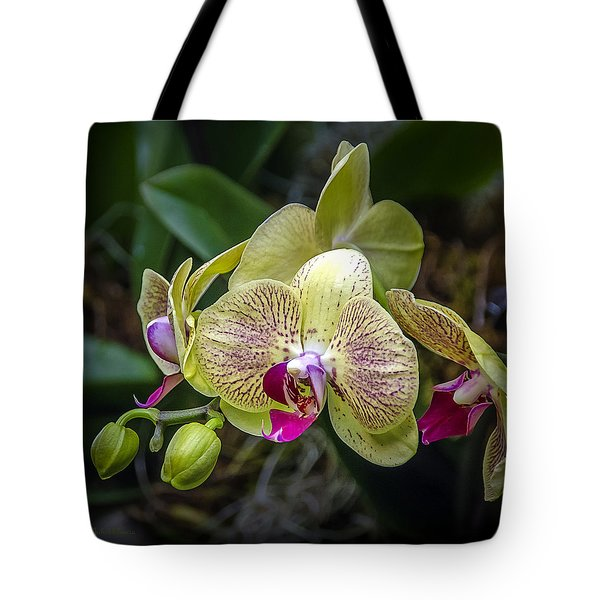 Beauty Of Orchids 3 Tote Bag