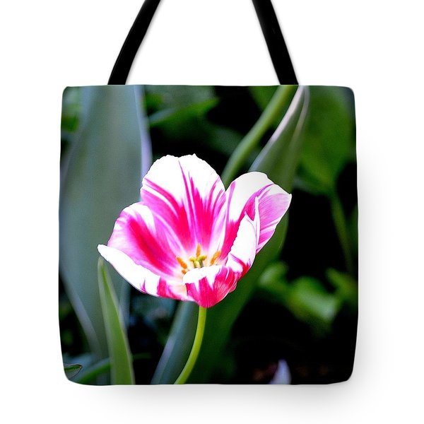 Beauty Tote Bag by Tara Potts