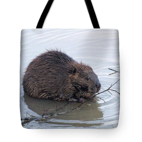 Beaver Chewing On Twig Tote Bag