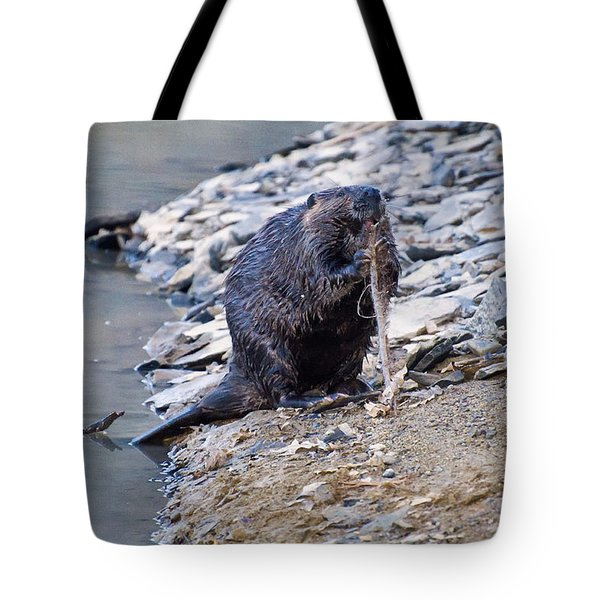 Beaver Sharpens Stick Tote Bag
