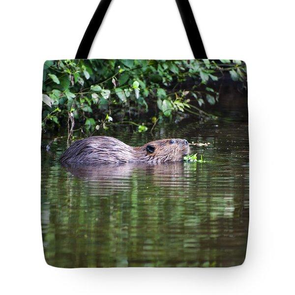 beaver swims in NC lake Tote Bag