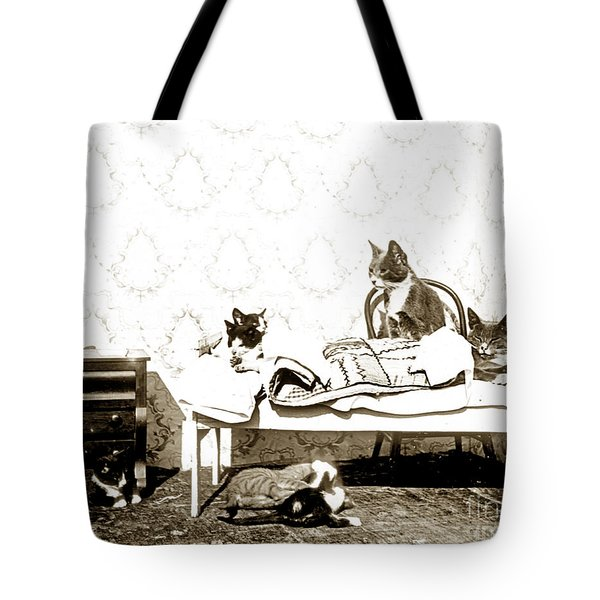 Tote Bag featuring the photograph Bed Time For Kitty Cats Histrica Photo Circa 1900 by California Views Mr Pat Hathaway Archives