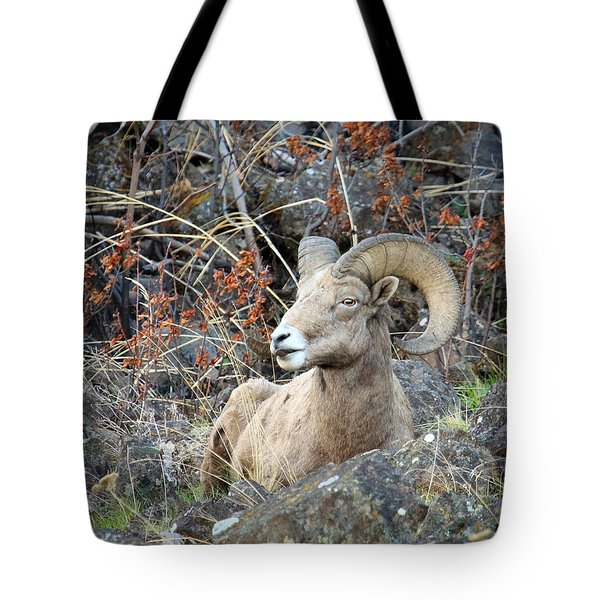 Tote Bag featuring the photograph Bedded Bighorn by Steve McKinzie