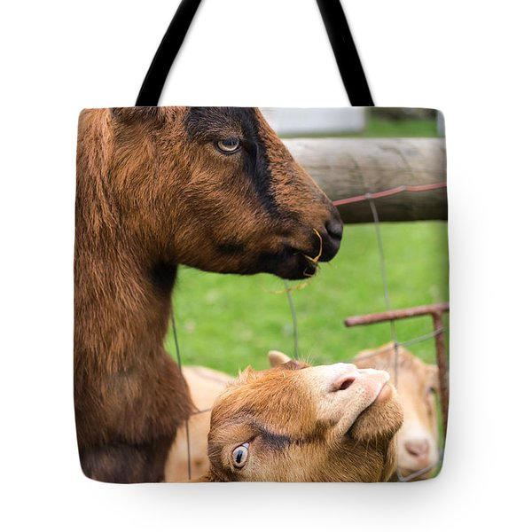 Begging For A Bite Tote Bag