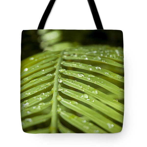 Tote Bag featuring the photograph Bending Ferns by Carolyn Marshall