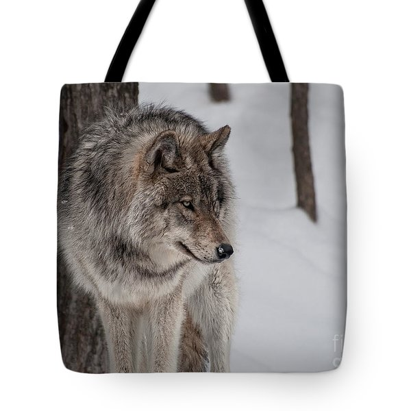 Tote Bag featuring the photograph Big Bad Wolf by Bianca Nadeau