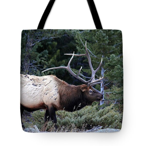 Big Boy Tote Bag