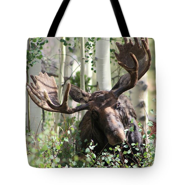 Big Daddy The Moose 3 Tote Bag by Fiona Kennard