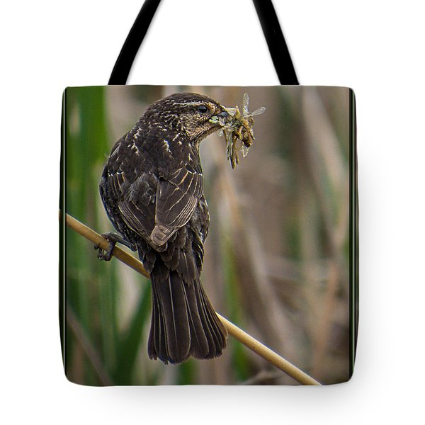Tote Bag featuring the photograph Big Dinner For Female Red Winged Blackbird II by Patti Deters