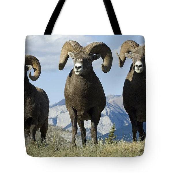 Big Horn Sheep Tote Bag by Bob Christopher