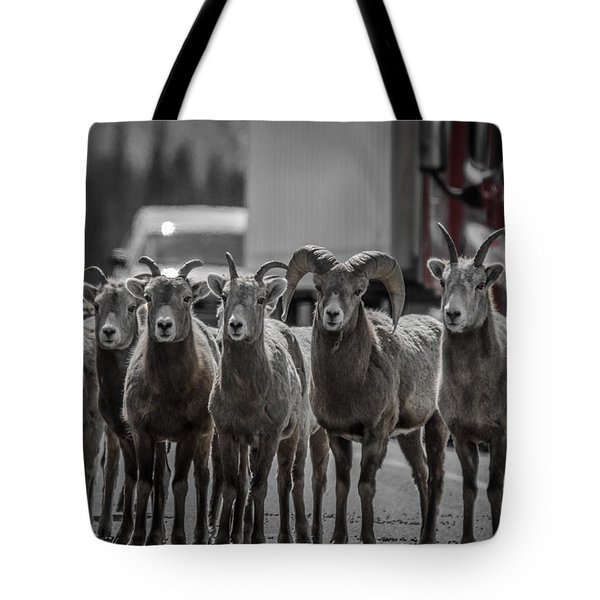 Big Horn Sheep Road Block Tote Bag