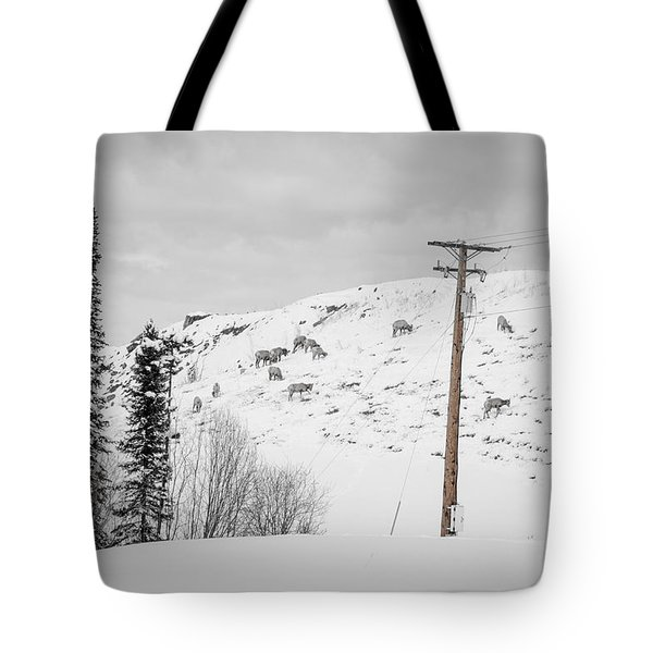Big Horn Sheep Hinton Hillside Tote Bag