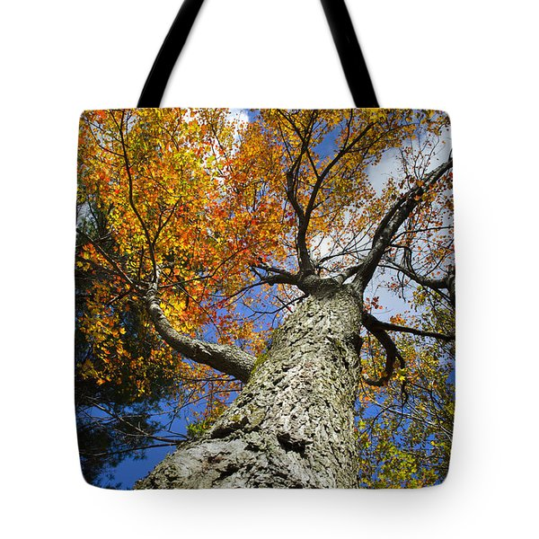 Big Orange Maple Tree Tote Bag by Christina Rollo