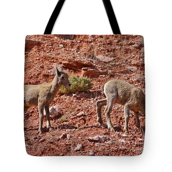 Tote Bag featuring the photograph Bighorn Canyon Sheep Wyoming by Janice Rae Pariza